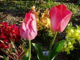 小学校の花6