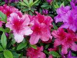 百道浜の花と緑2