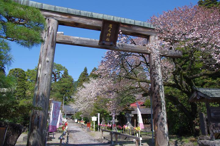 110428風車の神社で桜01