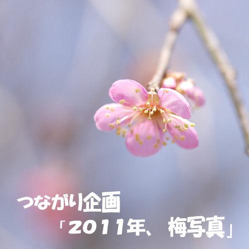 つながり企画「2011年、梅写真」