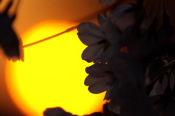 080711【MFS】カンドウオレンジ02