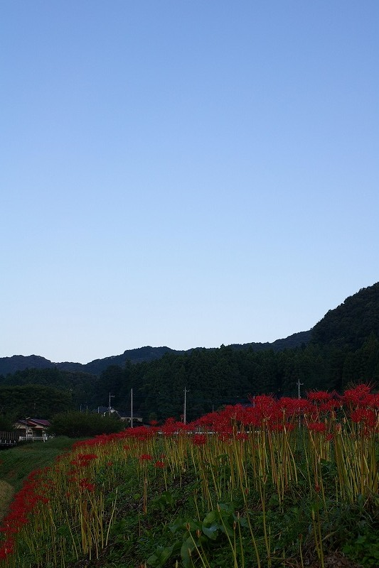070927青空と彼岸花06