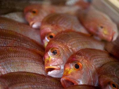 離乳食 初期 白身 魚