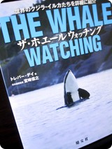 whale watch