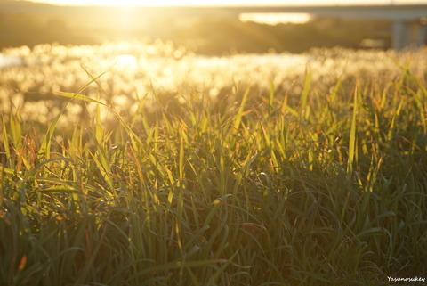 181101道端の草