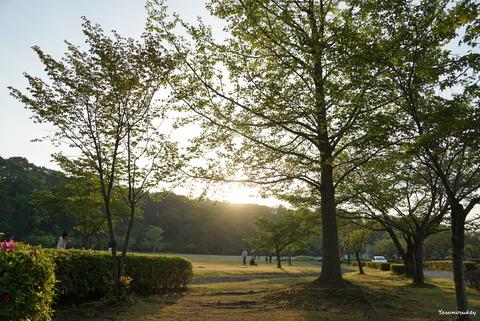 180422Trees&Sunset