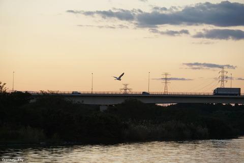 181101WhireHeron&Bridge
