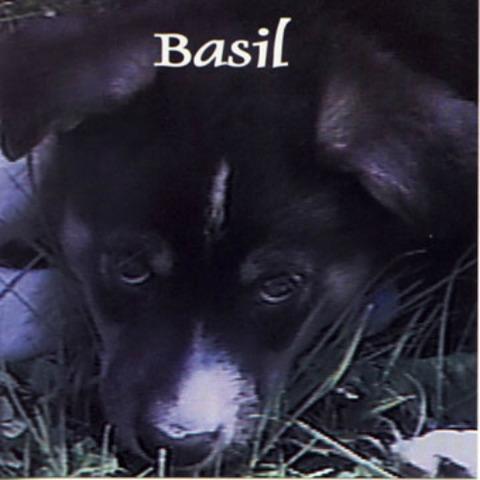 Joey Molland - Basil (1998)