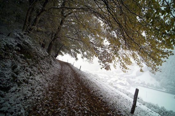 road-forest-trees-snow-winter-fallen-leaves