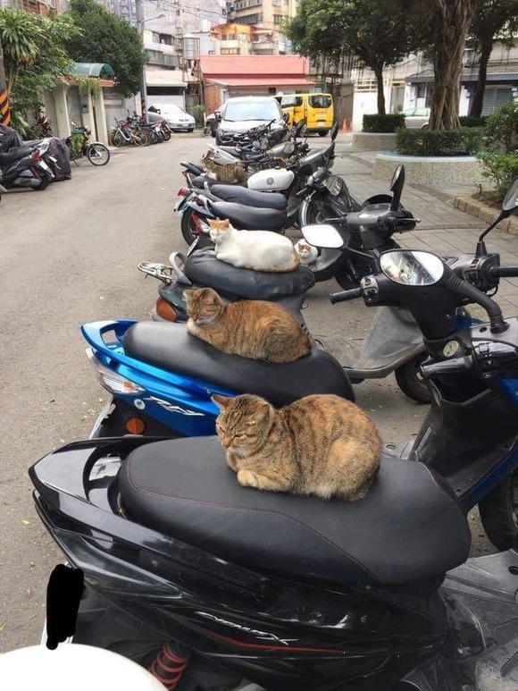 バイクに猫ちゃんが座ってて草