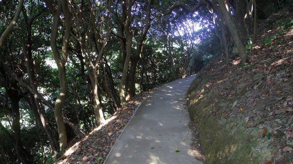 狭い山道をトロトロ走る原付
