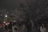 ライトアップは22時までですよ;北の丸公園千鳥ケ淵にて