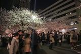 大勢の花見客が行き交う橋の上:目黒川(東京都目黒区)