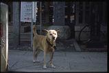 近くの神社の犬