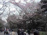 上野公園にて・この時期だと梅でしょうか?