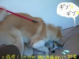 野菊 021serifu2