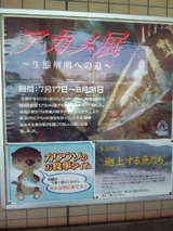 高知県2010夏 020