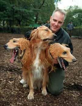 kerberos-dog1
