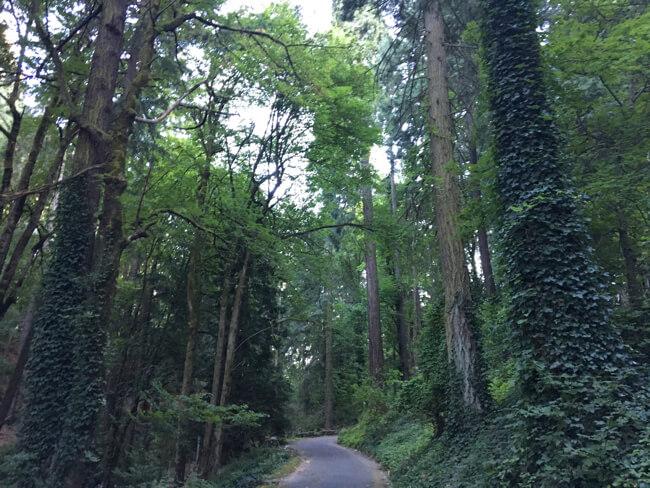 ポートランド日本庭園の周辺の様子 その4