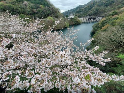 お花_200401_0028