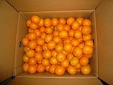 小池农场的橘子