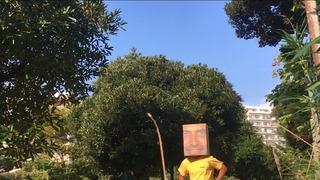 ハコナイデル、走る!