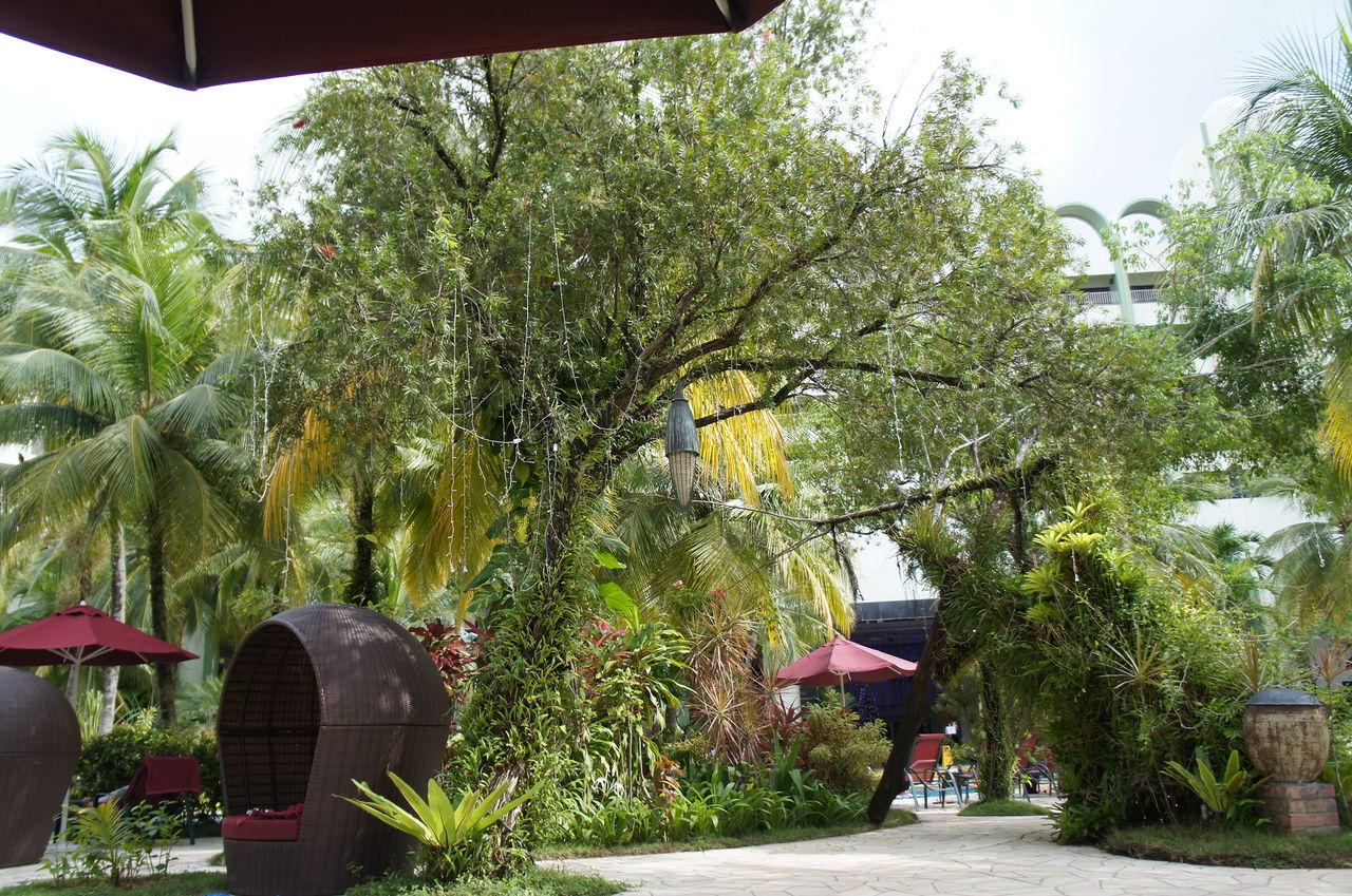 【2015年】マレーシア・ペナン島旅行 1歳4か月の時に行ったマレーシア・ペナン島の旅行記