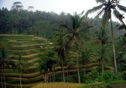 【2011年】インドネシア・バリ島旅行 夫婦二人でインドネシア・バリ島へ