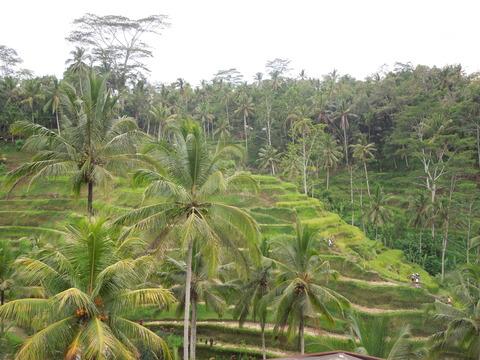 tegalalang 4