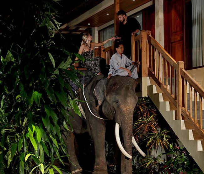gallery-night-safari-7