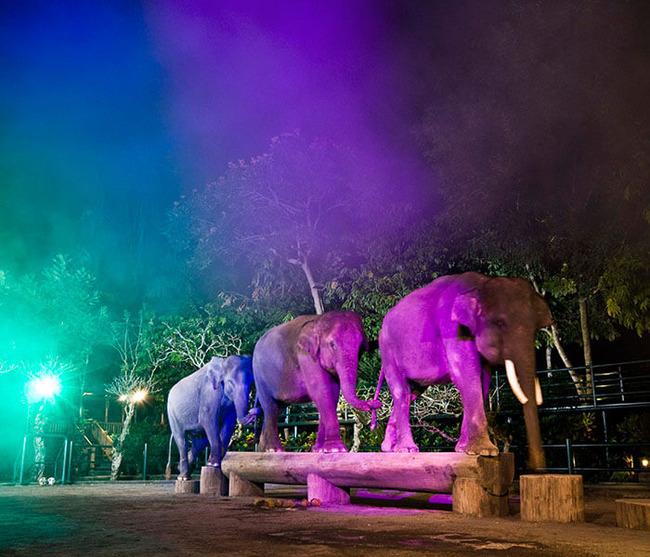 gallery-night-safari-8