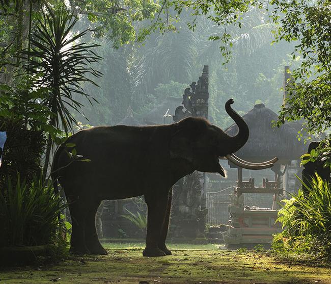 gallery-elephants-at-entrance-4