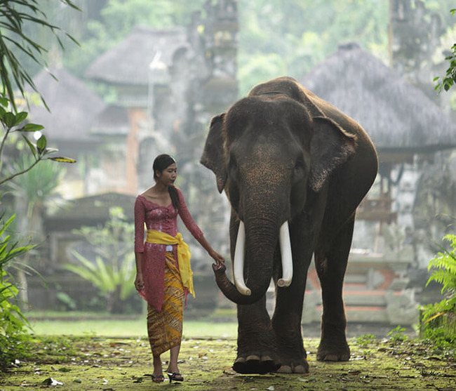 gallery-elephants-at-entrance-1