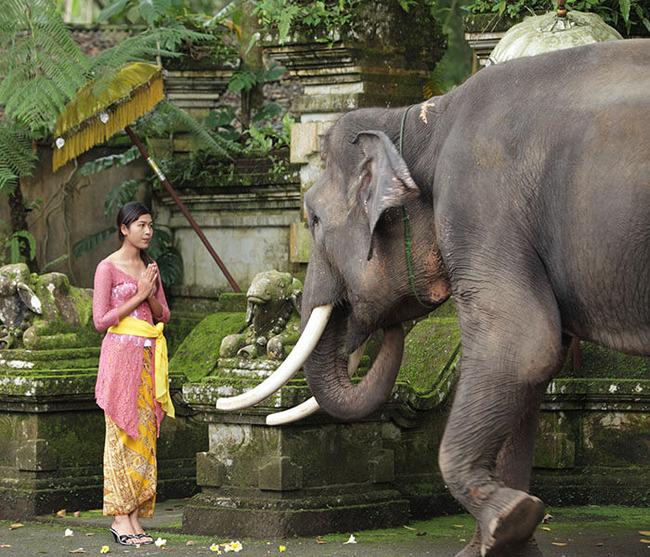gallery-elephants-at-entrance-3 (1)