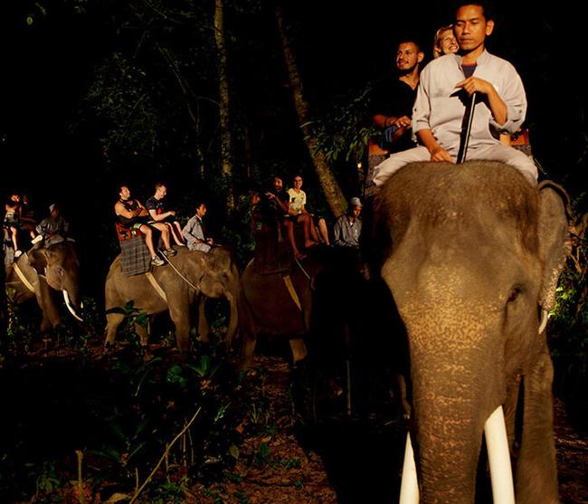 gallery-night-safari-4