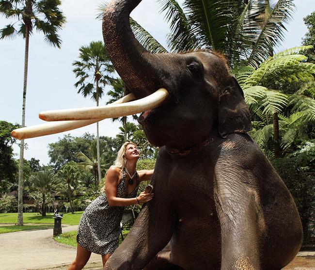 gallery-elephant-wash-3
