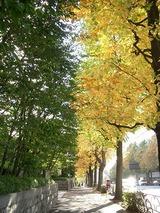 黄金色の街路樹
