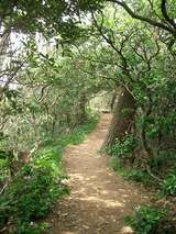 吊り橋への遊歩道