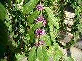 紫の実が秋っぽい