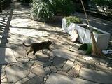 横切る猫、おじさんの掃除道具、猫のえさ