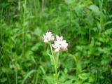 小さくてすごくかわいい花!