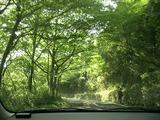 緑のトンネル!