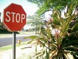 ハワイの道
