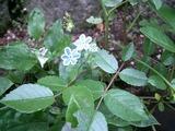 スパンコールみたいな花