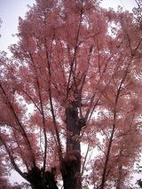すごくきれいなピンク