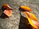 素敵な色の葉っぱがたくさん