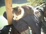 手すりに敷かれたおじさんの上着の上でくつろぐ猫