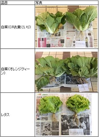 冬野菜(写真)