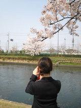 20070413sakura
