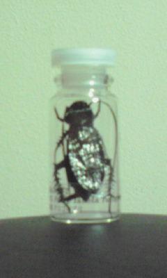 ニヒルゴキブリ